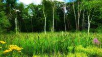 Smithfield, Rhode Island, USA  forest7-24-21