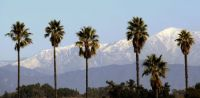 California Palm Trees, USA..