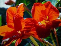 Happy Color. . . . .