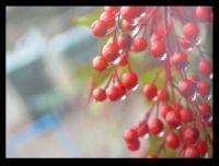 Derek's berries