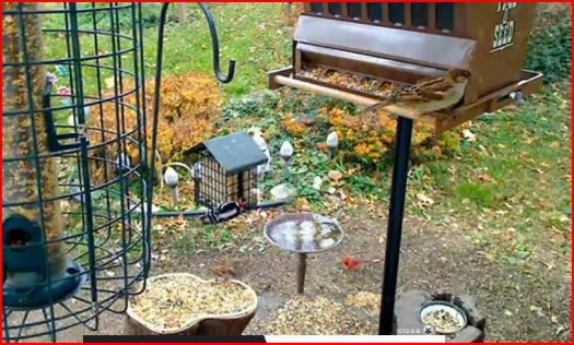 active birdfeeders