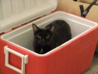 Cat in the cooler