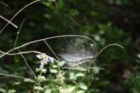 Lovely spider web