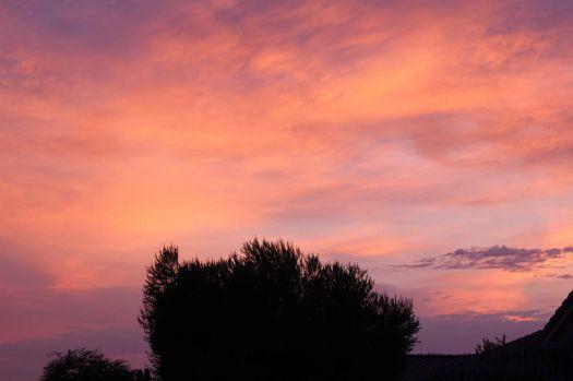 Early Morning in the Desert