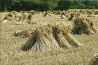 Sheaves in stooks