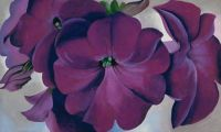Petunias, 1925 by Georgia OKeefe