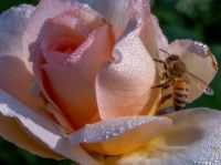 FLOWERS AND BEES.....