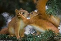 squirrels love