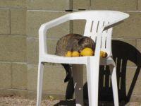 Snick on lemons