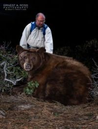 Taking pet bear out for a bathroom break. :D