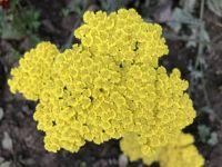 pretty yellow flowers