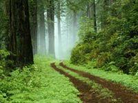 Beautiful__Path