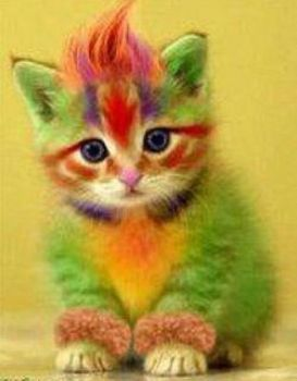 Colored kitten