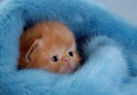 cuteness 13