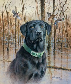 Great Retriever-BlackLab