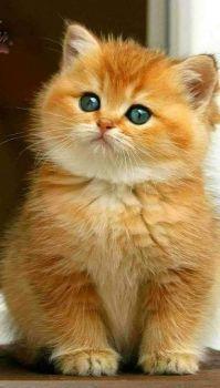 Cute and sweet kitty