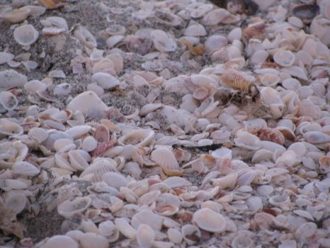 tons of shells