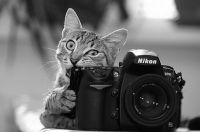 Cool Cat prefers Nikon