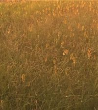 almost abstract-grass