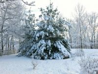 Gary birthday snow-2015-Kentucky-2000X1500