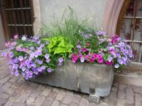 The Old Stone Trough, Alsace