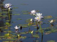 Keep River Wetlands, W. Australia