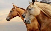 3 horses