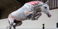 Horses Inside Out, #3 Skeleton Horses