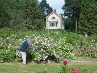 In Arboretum
