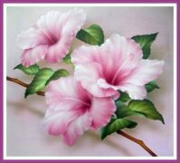 The Pink Hibiscus