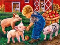 Feeding Pigs on The Farm