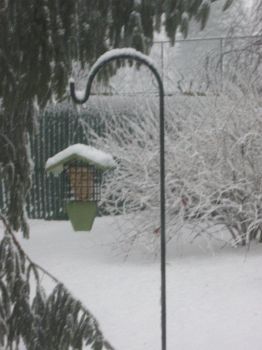 suet feeder, as the snow began, 2/26/13