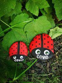 covid bugs