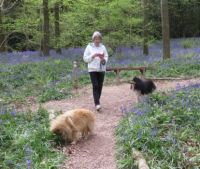 Walking in the bluebells.