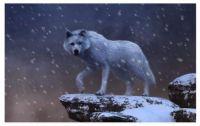 White Wolf in a Blizzard