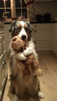 No, please don't take Mr. Cuddles away; he doesn't need a bath!
