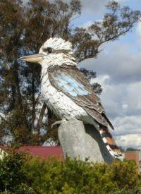 Kookaburra in Kurri Kurri