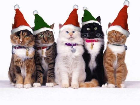 A cat lovers Christmas