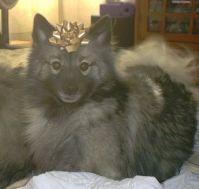 Gillian at Christmas