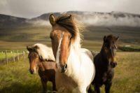 Wind-Swept Beauties