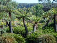 Logan Botanic Gardens SW Scotland