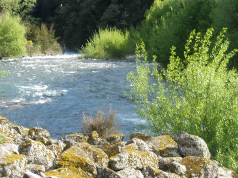 New Zealand-Owen River