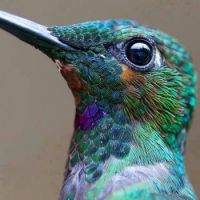 Hummingbird - close up