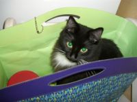 cat in the gift bag - 63