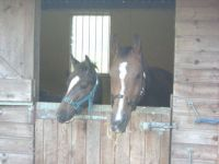 Sharing a stable