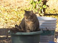Snick in a pot