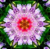 Passion Flower 🌿🌺