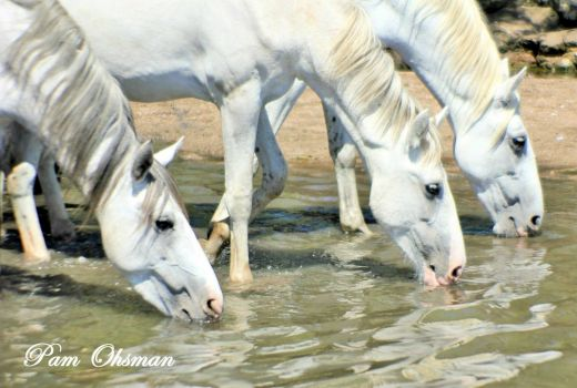 THREE ANGELS from Salt River Wild Horses