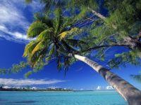 Bene Palm
