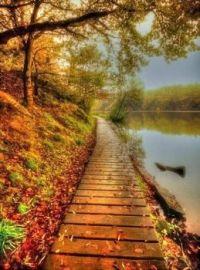 Boardwalk By The River